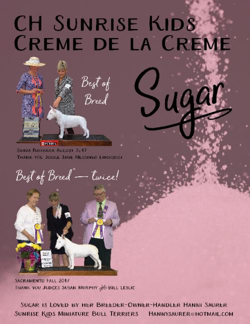 sugar ad_spring 2018